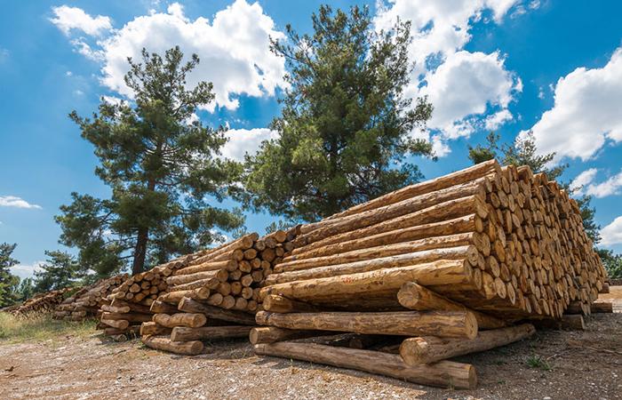 整木定制常用木材有哪些?